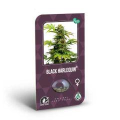 Black Harlequin feminizada x3 Sensi Seeds